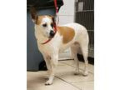 Adopt Delilah a Terrier (Unknown Type, Small) / Mixed dog in Greeneville