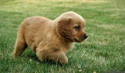 Craigslist Animals And Pets For Adoption Classifieds In Barling