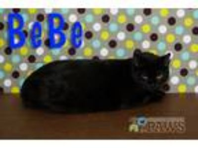 Adopt BeBe a All Black Domestic Shorthair / Mixed (short coat) cat in San