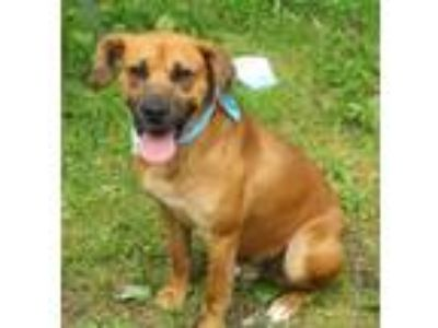 Adopt Bounce a Tan/Yellow/Fawn Black Mouth Cur / Mixed dog in Voorhees