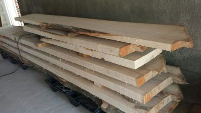 Willow Oak Slabs