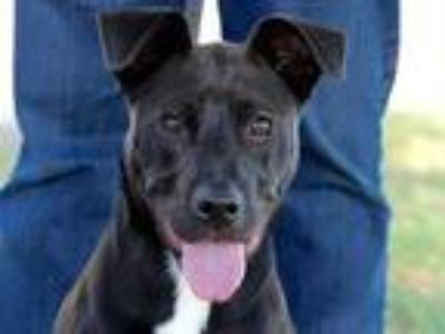 Adopt Blane a Black Mixed Breed (Medium) / Mixed dog in Georgetown