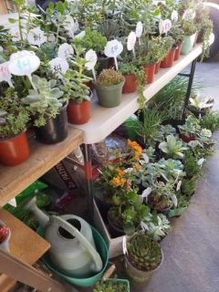 Succulents at lower than retail prices