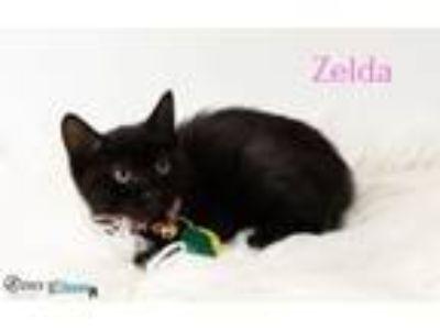 Adopt Zelda a Domestic Short Hair
