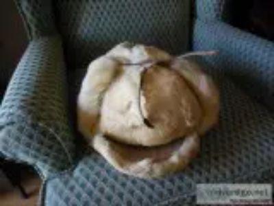 Alaska Dall Sheep hat and shoulder mount