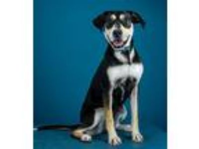 Adopt Apricot a Terrier