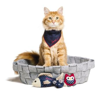 Wholesale Cat Products | Pet Products - Wholesaleforstores
