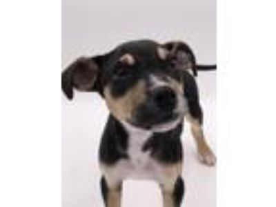 Adopt Skeeter a Terrier (Unknown Type, Small) / Mixed dog in Thousand Oaks