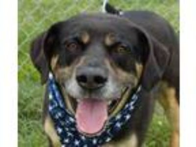 Adopt Mighty a Rottweiler