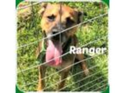 Adopt RANGER a Black - with Tan, Yellow or Fawn German Shepherd Dog / Mixed dog