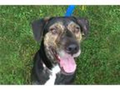 Adopt Mister Marley a Plott Hound / Mixed dog in Durham, NC (22754407)
