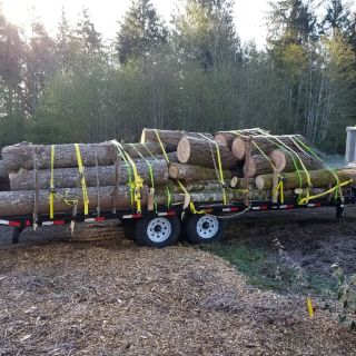 Quality Logs for sale by the cord