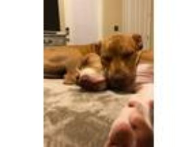 Adopt ELLIE'S 2~6 MO OLD PUPPIES READY FOR ADOPTION! DNA TESTED!