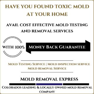 Mold Related Services in Denver