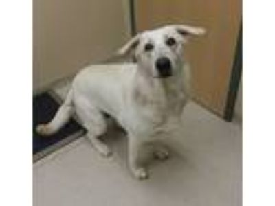 Adopt WYNTER a German Shepherd Dog