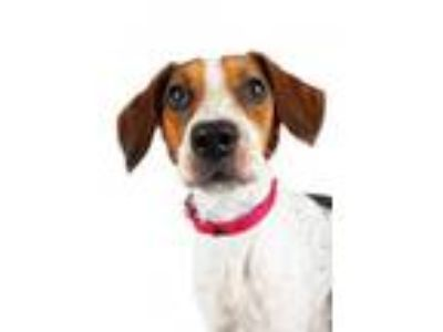 Adopt Ruby a Beagle, Pointer