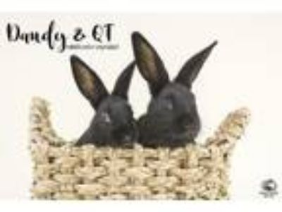 Adopt Dandy & QT a Bunny Rabbit