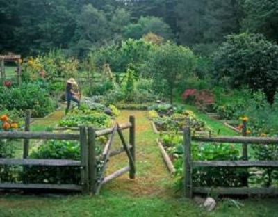 Land for vegetable garden