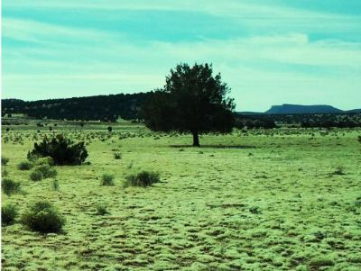 $19,900, 40 acre ranch - only $19,900
