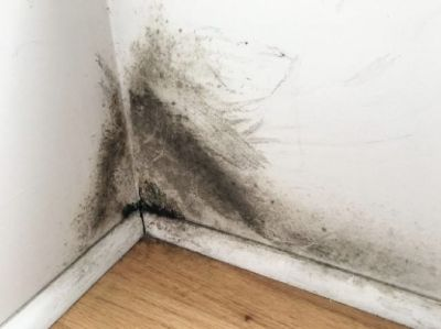 Cost of removing black mold