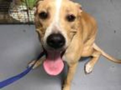 Adopt *QUESO a Brown/Chocolate Mixed Breed (Medium) / Mixed dog in Ocala