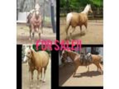 Craigslist Horses For Sale Classifieds In Waco Texas Claz Org