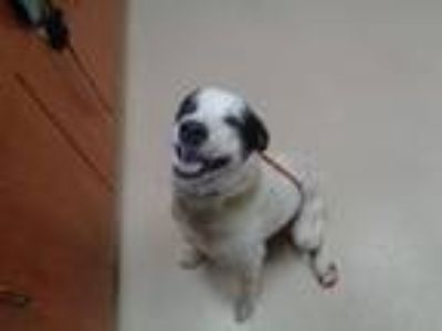 Adopt Brock a Border Collie, Mixed Breed