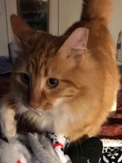 Found  kitty no chip collar has no info