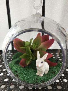 5x5 plastic hanging terrarium, 1 succulent and bunny, Jute hanger included but not pictured.