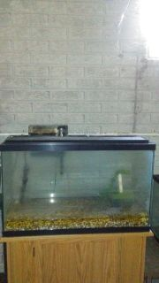 40 gallon aquarium with accessories