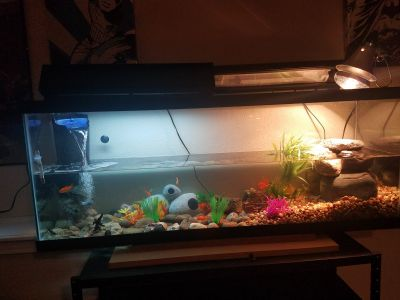 55 gallon fish tank with setup
