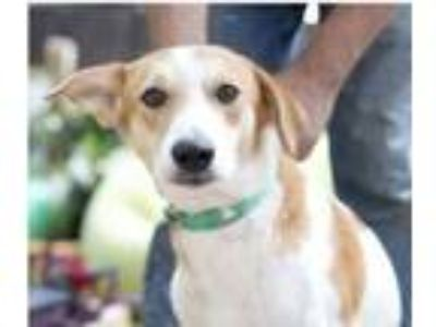 Adopt Romulus a Mixed Breed