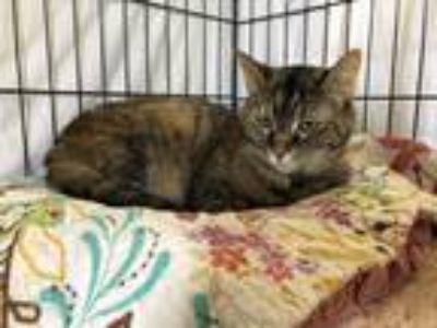Adopt Nickie a Tortoiseshell Domestic Shorthair (short coat) cat in Fallbrook
