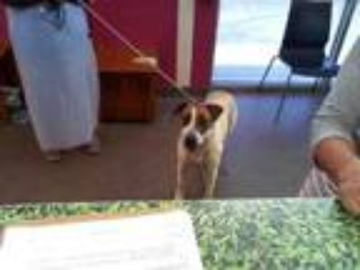 Adopt FIONA a Pointer, Mixed Breed