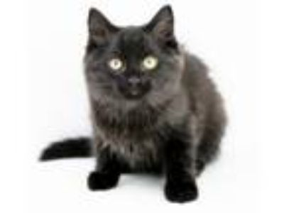 Adopt Lyme is PURRFECTLY poofy!! MUST BE ADOPTED WITH A BUDDY NO EXCEPTIONS!