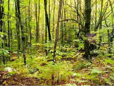 Pond Hill Road LOT 13 Lunenburg, (190) 12.3 ACRE wooded lot