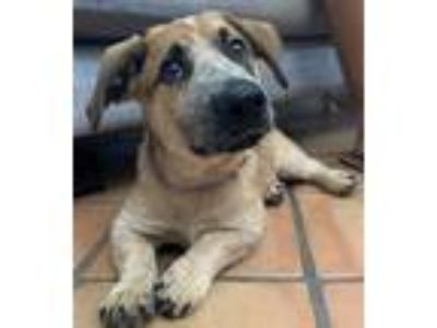 Adopt A Puppy Jasmine - Lilly s Puppy a Tricolor (Tan/Brown & Black & White)
