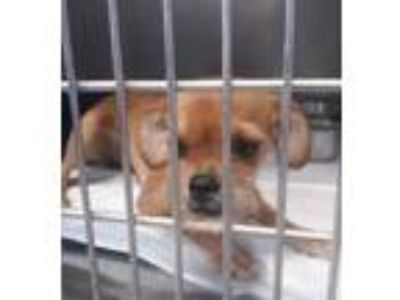 Adopt Pamela a Tan/Yellow/Fawn Terrier (Unknown Type, Small) dog in Manhattan