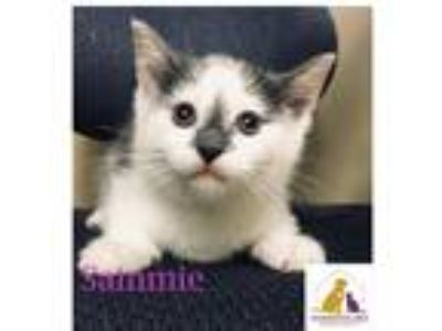 Adopt Sammie a White (Mostly) Domestic Mediumhair (medium coat) cat in Eighty