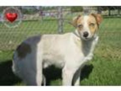 Adopt Hunter Yrly 187 a Terrier