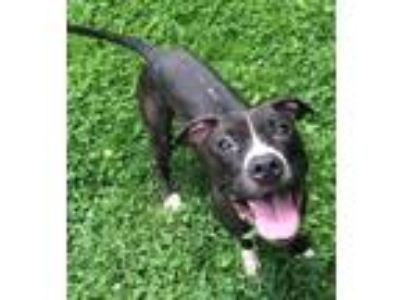 Craigslist - Dogs for Adoption Classifieds in Toledo, Ohio ...