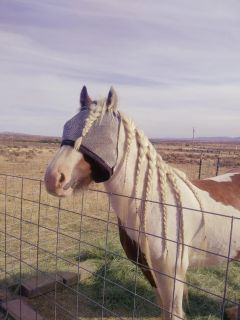 Boarding *Horse Not for sale*