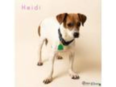 Adopt Heidi a Tan/Yellow/Fawn Jack Russell Terrier / Mixed dog in Fairhope