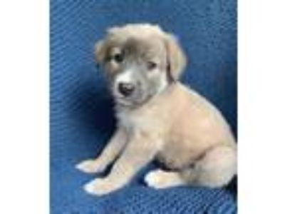 Adopt Chance a Mixed Breed