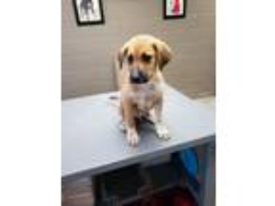 Adopt ELVIS a Mixed Breed
