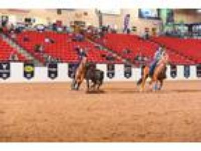 World Ch team penning mare Head Heel Ranch Horse