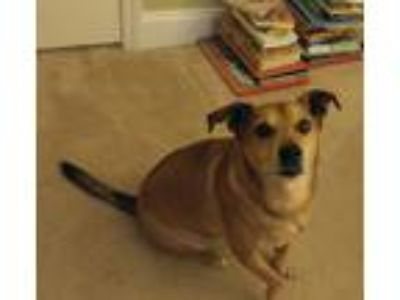 Adopt Skipper a Tan/Yellow/Fawn Terrier (Unknown Type, Medium) dog in