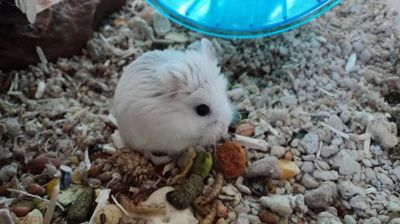 Hamsters that need a good home