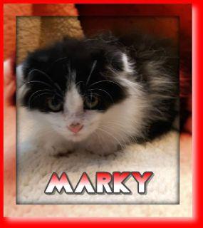 Marky Male Scottish Kilt Mix