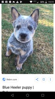 200$ looking for a puppy